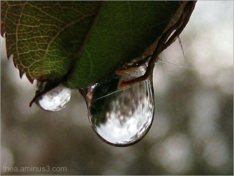 raindrops macro leaf