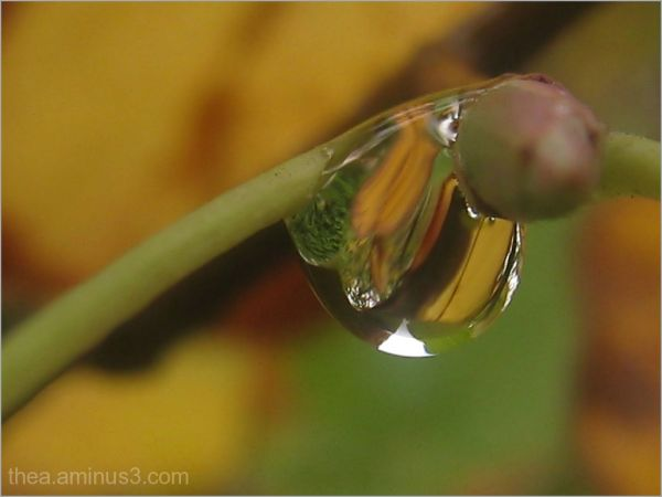 macro autumn rain nature water
