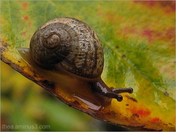 macro snail garden leafs