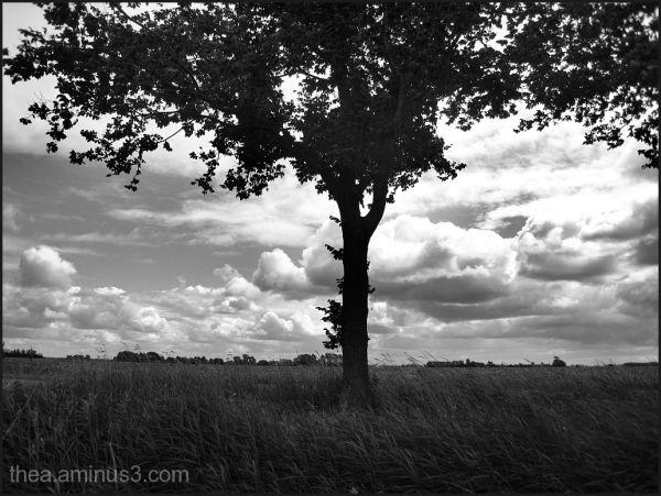 landscape  tree clouds B&W