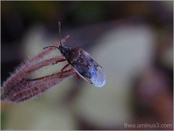 macro insect  garden wants