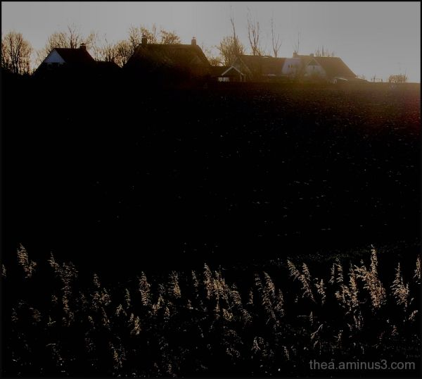 landscape reed nature