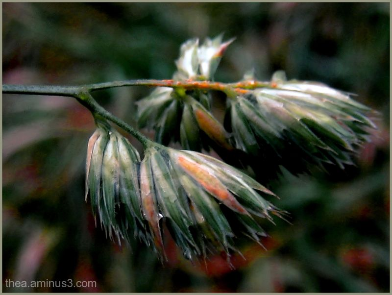macro flower rain nature