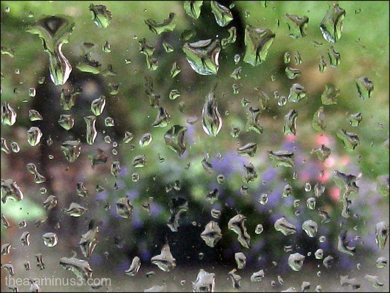 rain drops nature