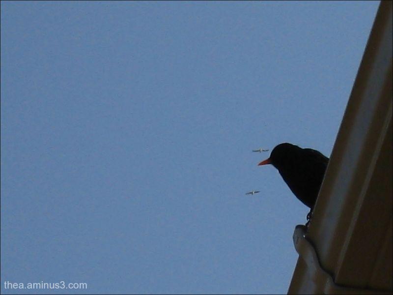 bird on the roof...