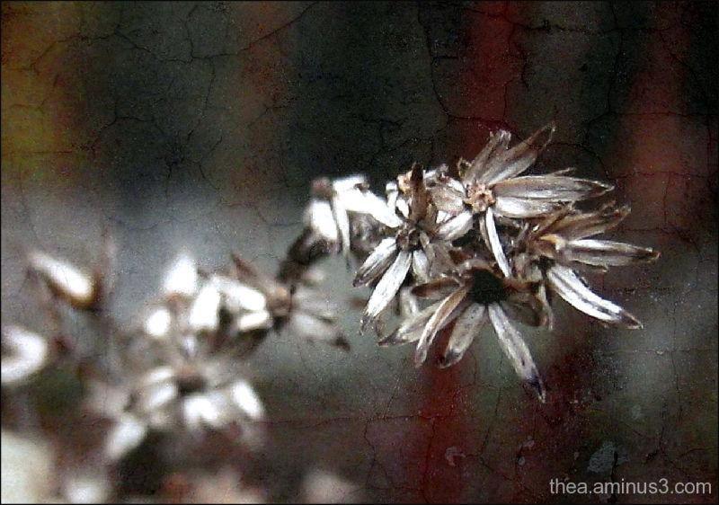 flowers macro garden nature