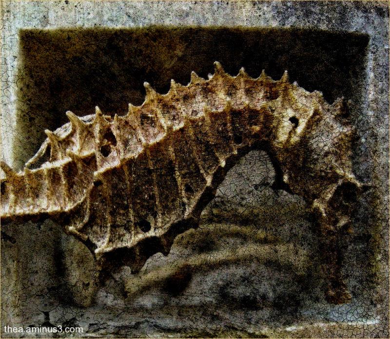 macro seahorse skeleton