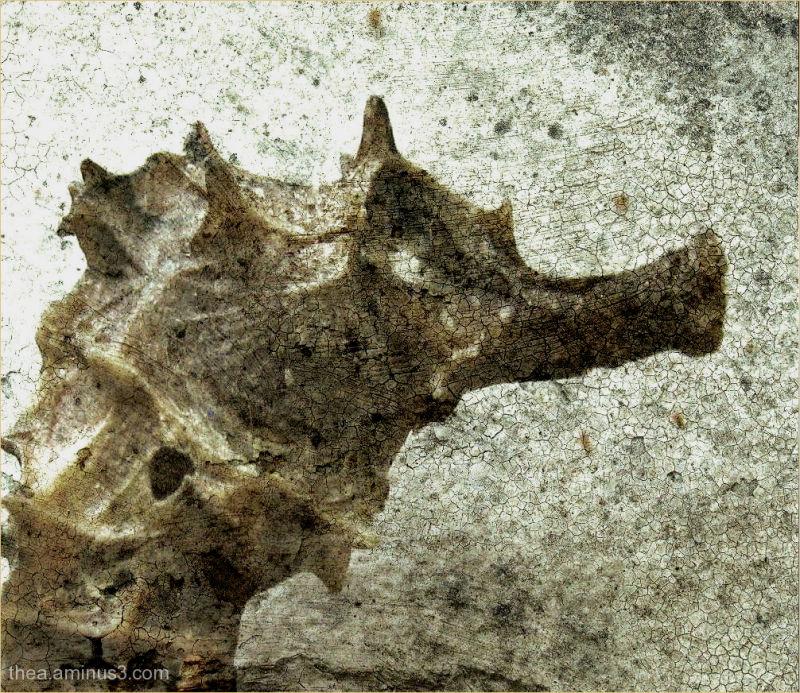portrait macro seahorse