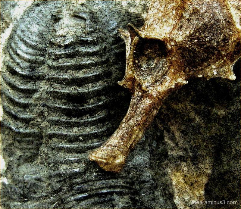 seahorse trilobite macro