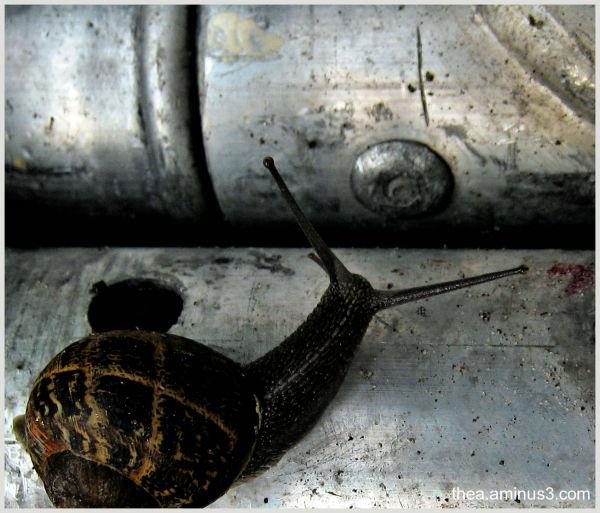 iron snail macro