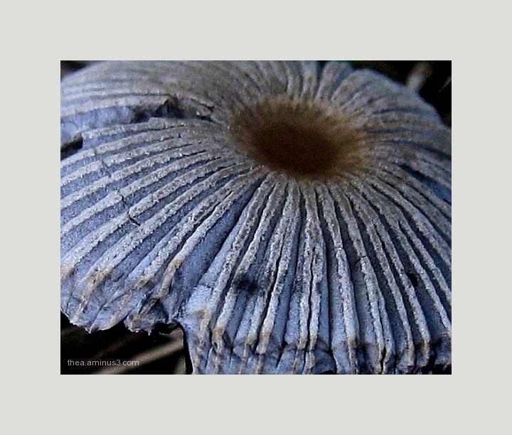 mushroom textures blue macro
