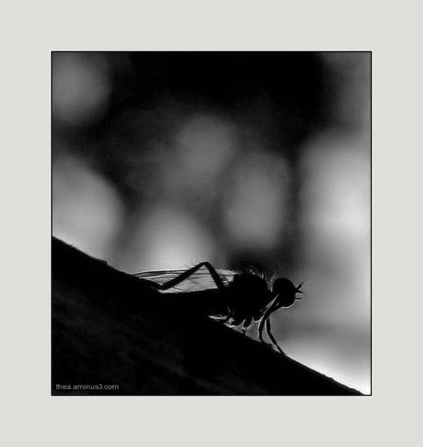 fly  nature  macro