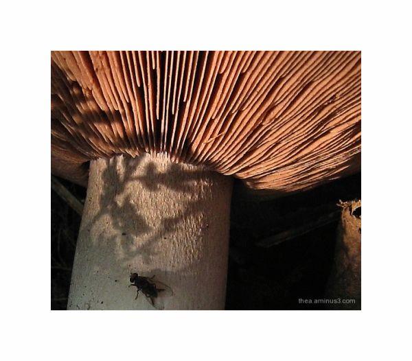 mushroom fly autumn macro