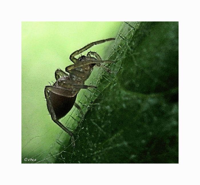 spider leaf macro