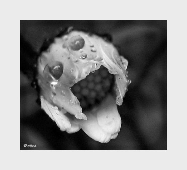 flower rain macro