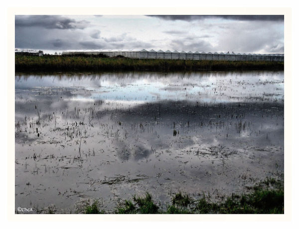 water reflections glasshouses Friesland