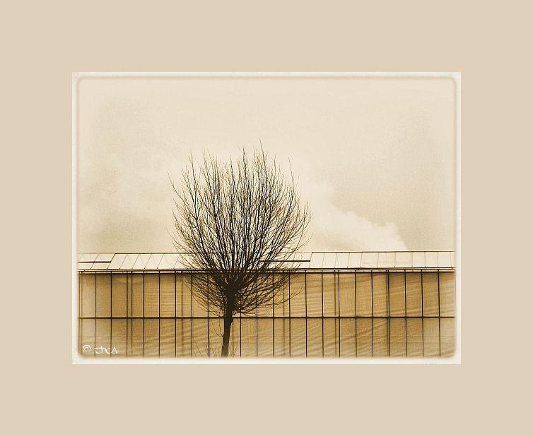 greenhouse tree plastic