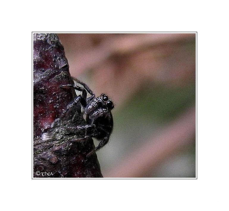 spider eyes macro