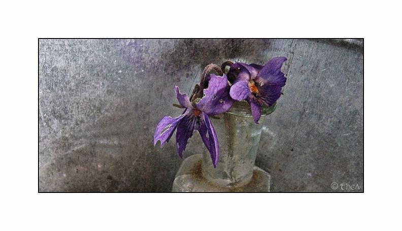 glass bottles violets macro