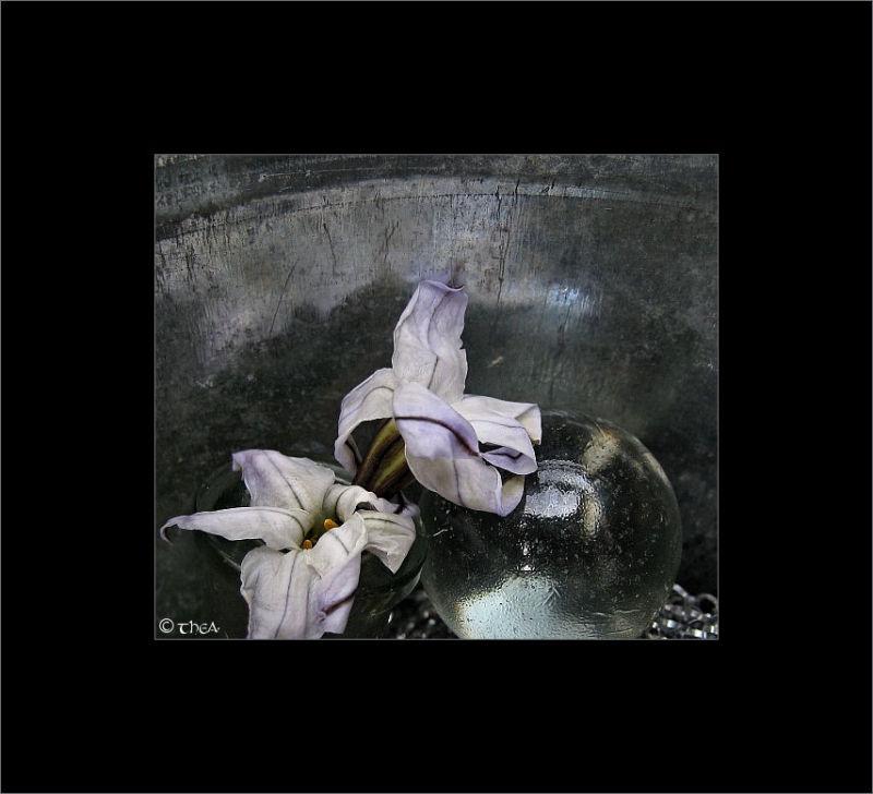 flowers marble macro