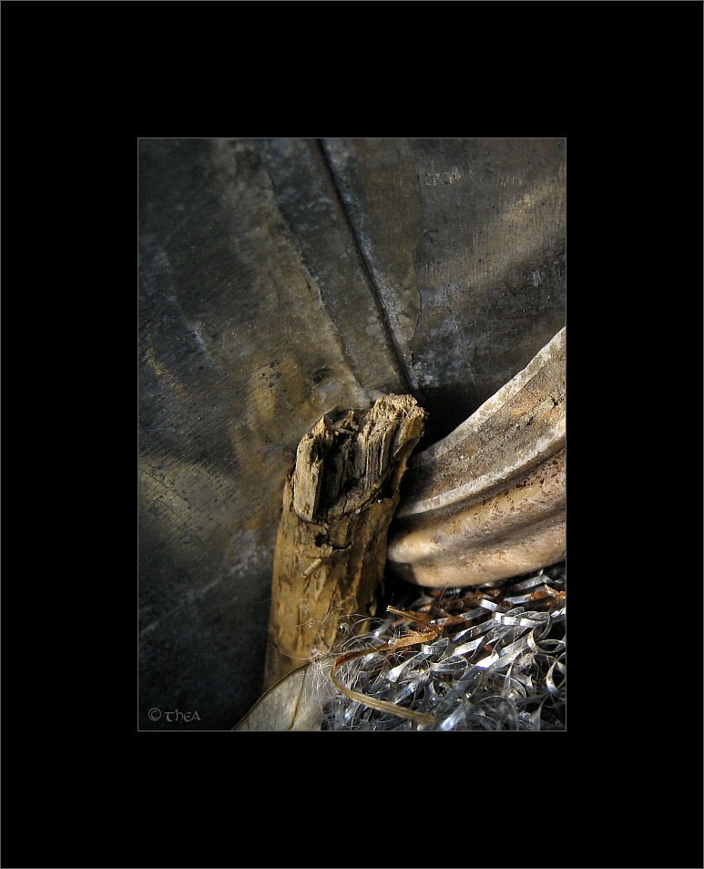 wood tooth macro