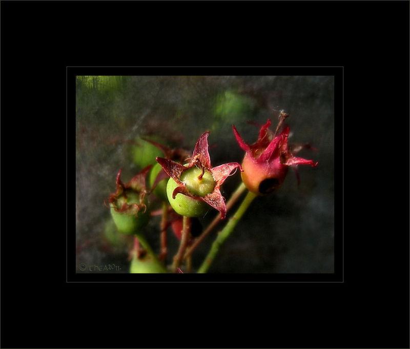 seeds tree garden macro