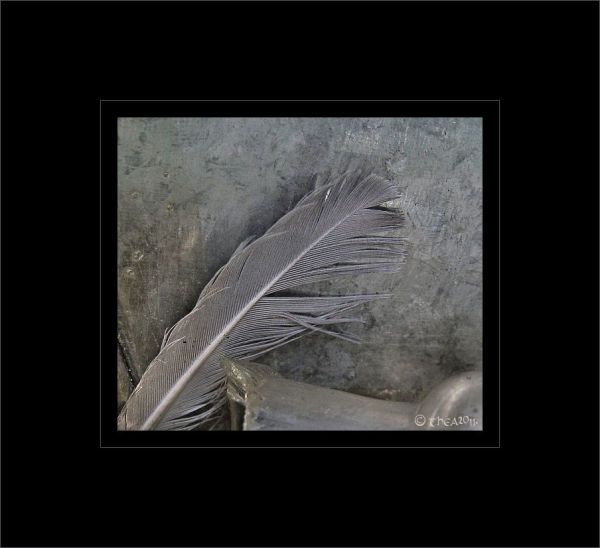 feather glass macro