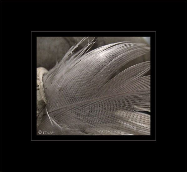 feather texture macro abstract