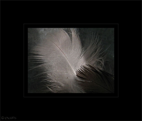 feathers macro abstract
