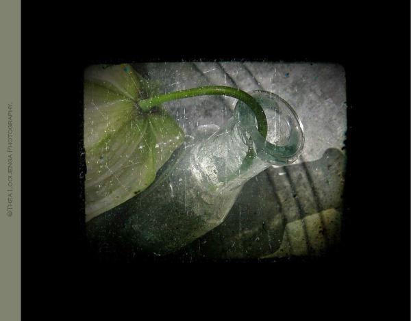 bottle flower fritillaria macro processed