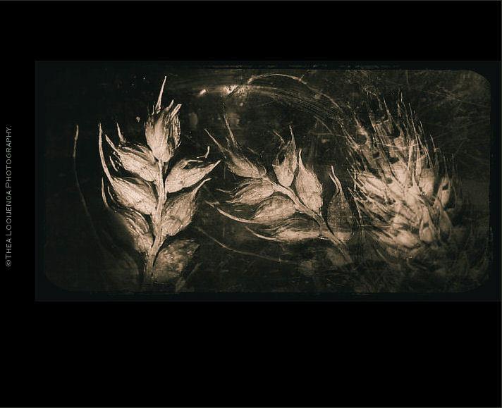 weeds macro processed