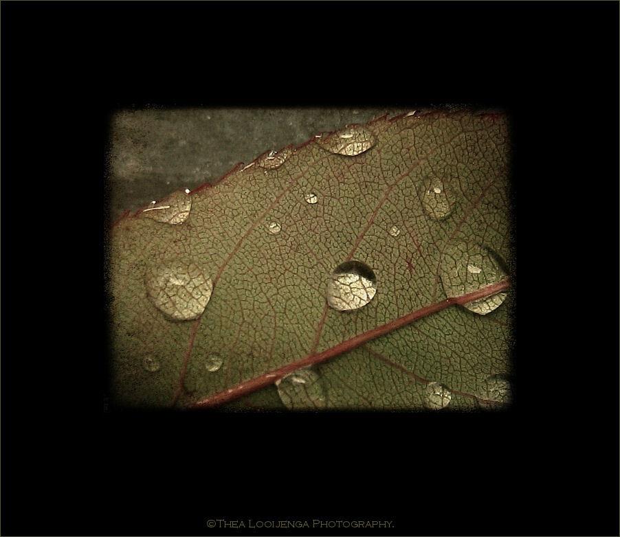 leaf drop macro