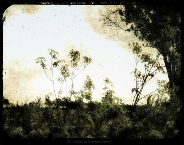 fluitekruid cowparsley landscape friesland