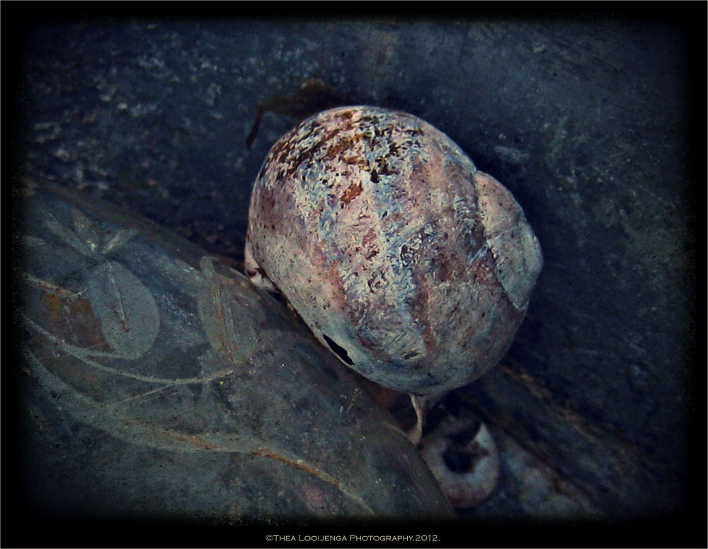 snail cottage textures macro processed