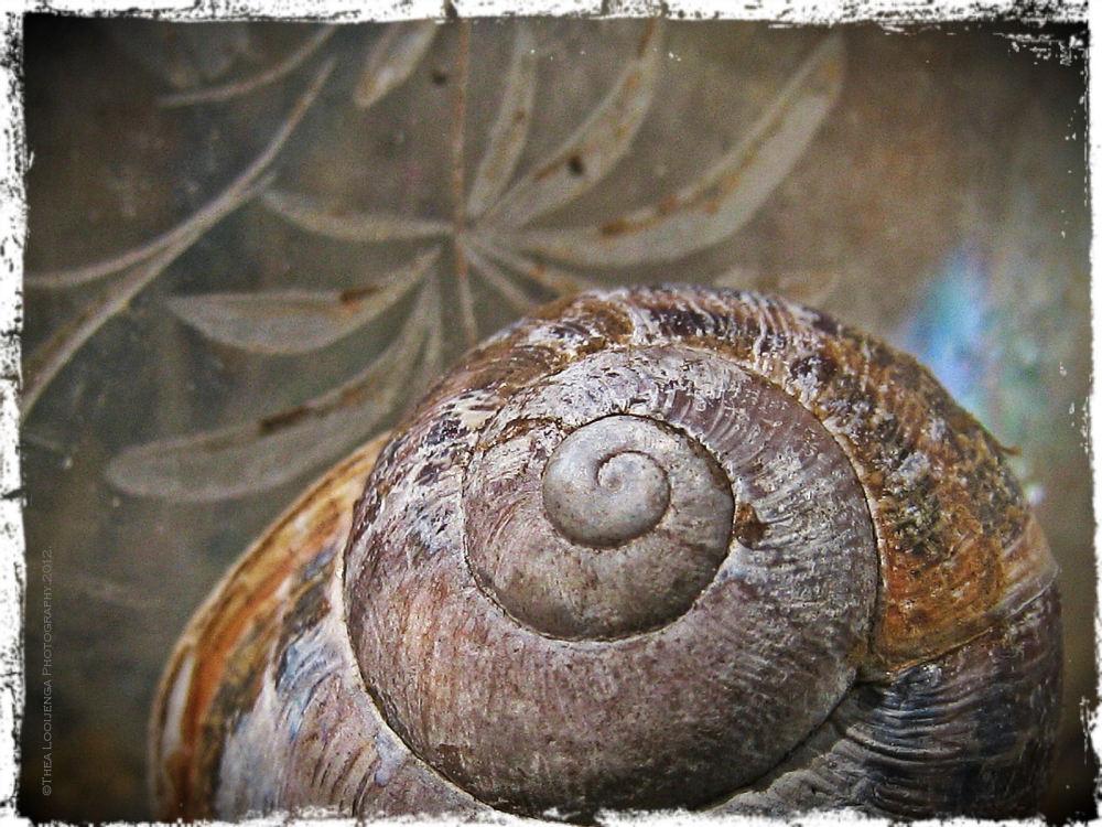 snail cottage textures macro