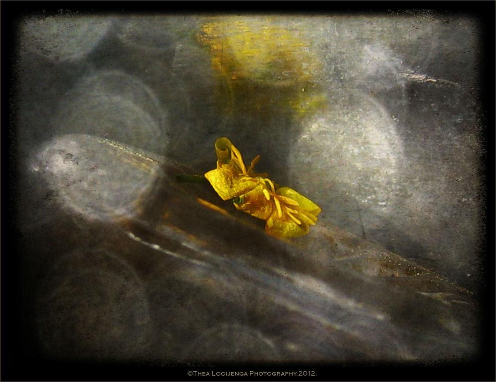 macro flower processed