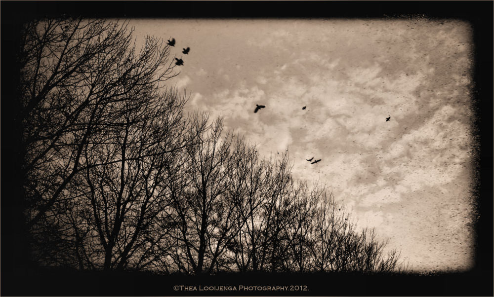 birds processed