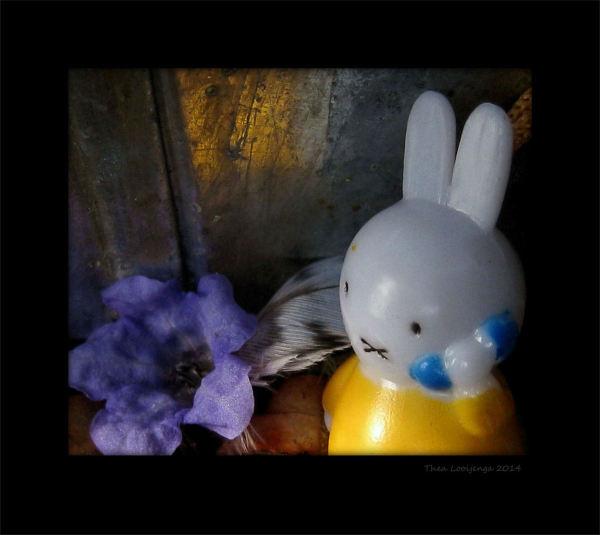 bunny macro