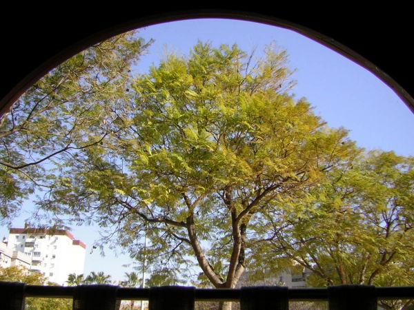 árbol visto desde una ventana curva