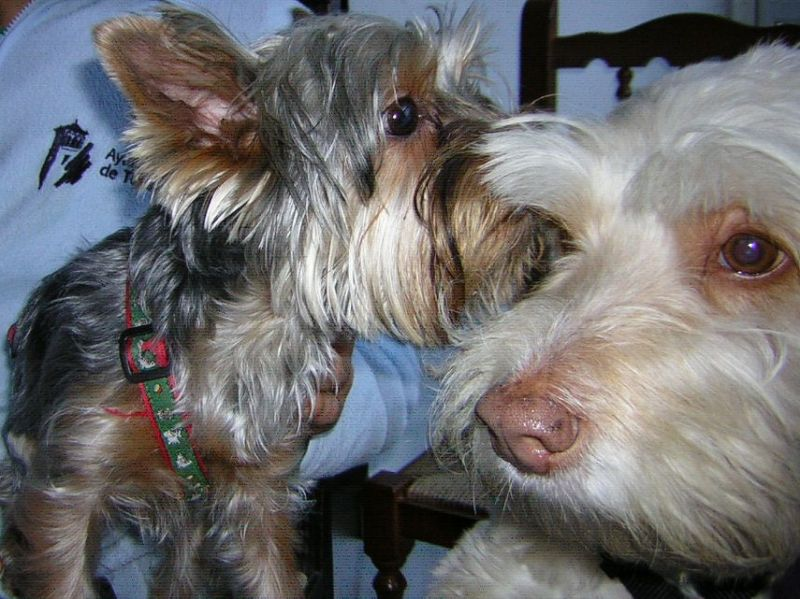 Un perro parece decir un secreto a otro