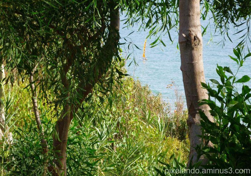 pequeña embarcación entre ramas