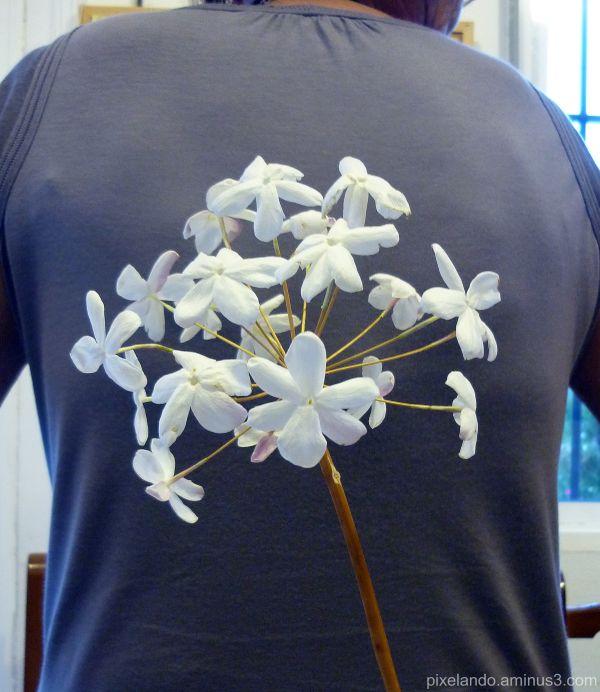 rama seca con jasmines sobre fondo de camiseta