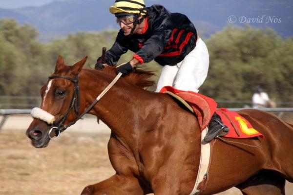 Horse race: Effort