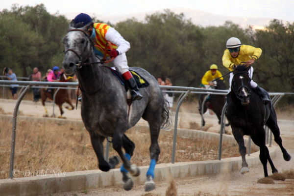 Horse race: chase