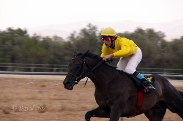 Horse race: speed
