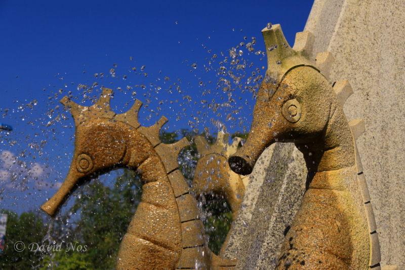 Fountain of sea horses