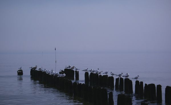 Baltic Birds