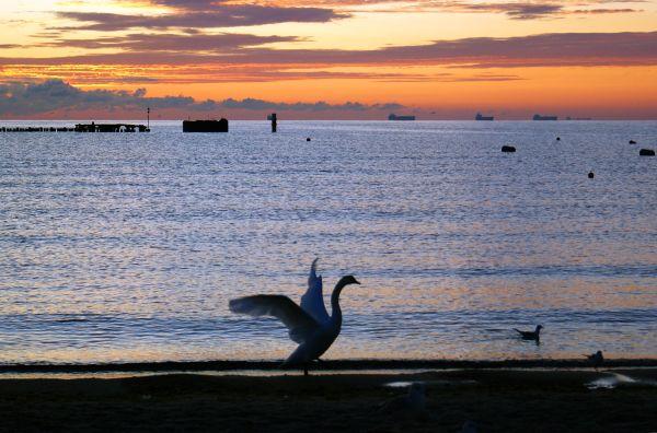 sunset, baltic sea, sopot