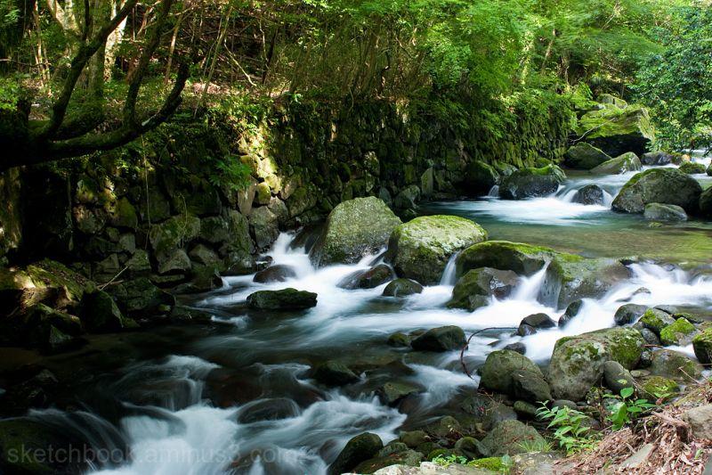 Fresh green and clear stream