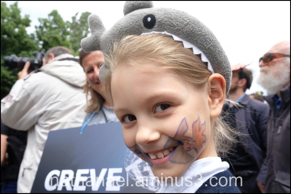 Shark...